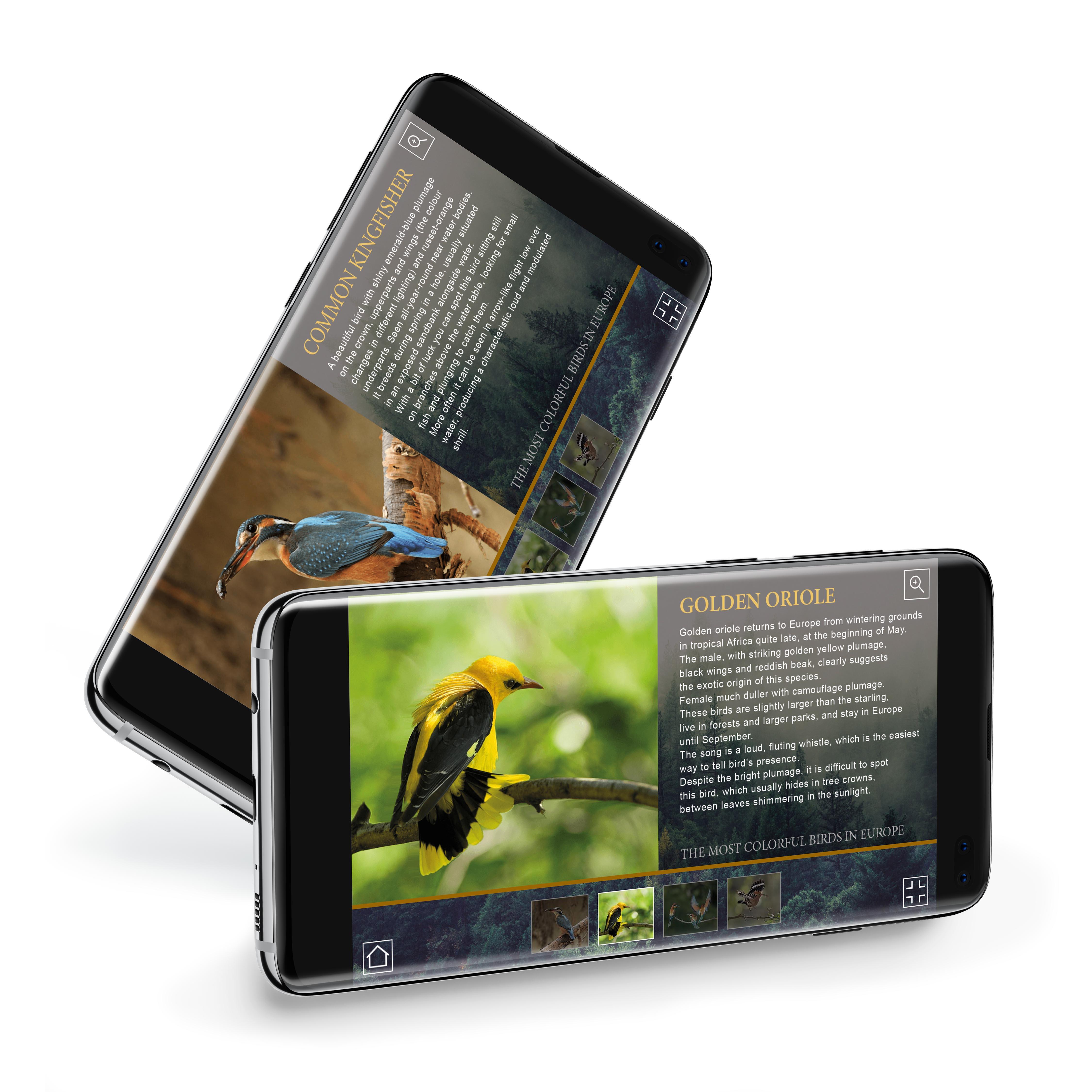 Ptaki Europy mobile - InPlanner